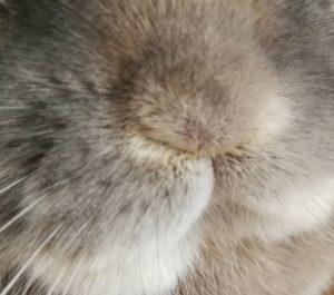 うさぎの鼻